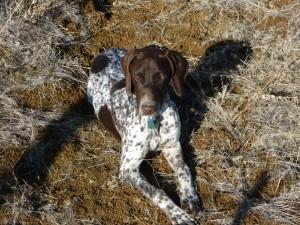 Perro descansando al sol
