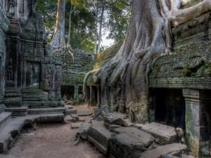 Las raíces de grandes árboles en la estructura del templo Angkor Wat