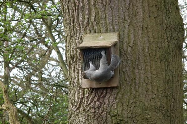 Ardilla colgada de un comedero para pájaros