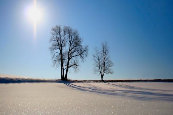 Dos árboles y el brillo del sol sobre la nieve