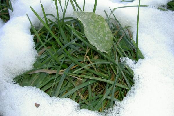 Nieve sobre la hierba