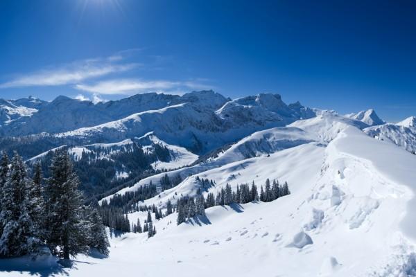 Nieve en árboles y montañas