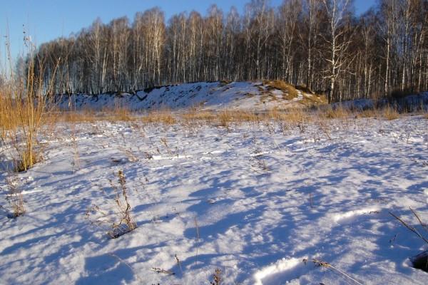 Nieve cubriendo las plantas secas