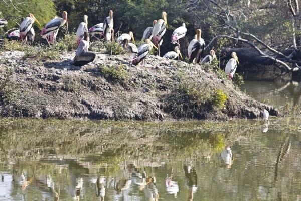 Aves de gran pico junto al agua