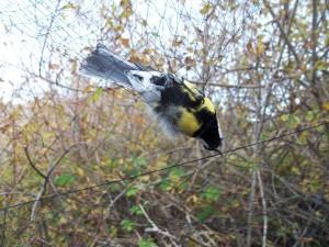 Postal: Pájaro atrapado en una red