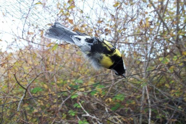 Pájaro atrapado en una red