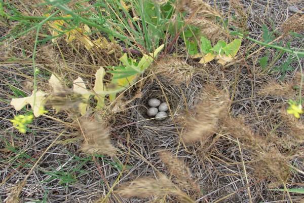 Huevos de ave en un nido