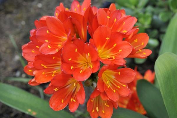 Pequeñas flores naranjas