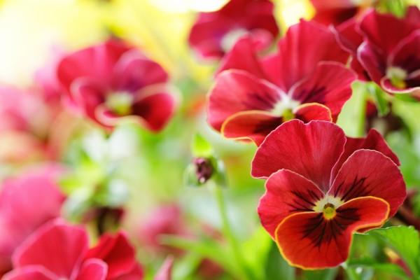 Bonitas y pequeñas flores rojas