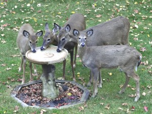 Postal: Ciervos bebiendo agua en una fuente