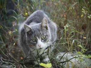 Un precioso gato en el bosque