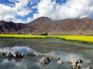 Postal: Flores amarillas junto a un lago