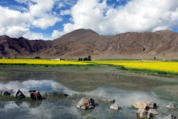Flores amarillas junto a un lago