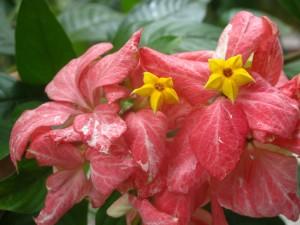 Postal: Planta con hojas de color rojo