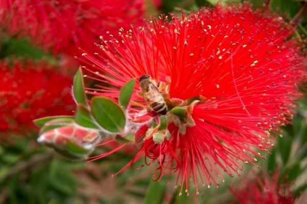 Abeja en una bonita flor