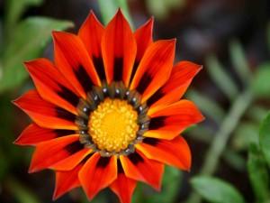 Bella flor con pétalos naranjas