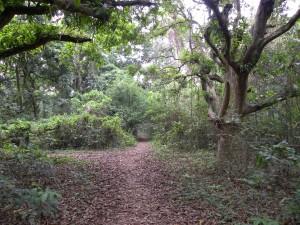 Postal: Bosque con plantas y árboles verdes