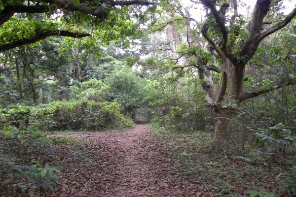 Bosque con plantas y árboles verdes