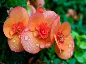 Postal: Gotas de agua sobre pequeñas flores