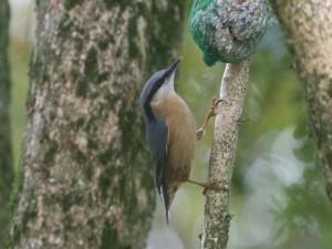 Pájaro comiendo de una red