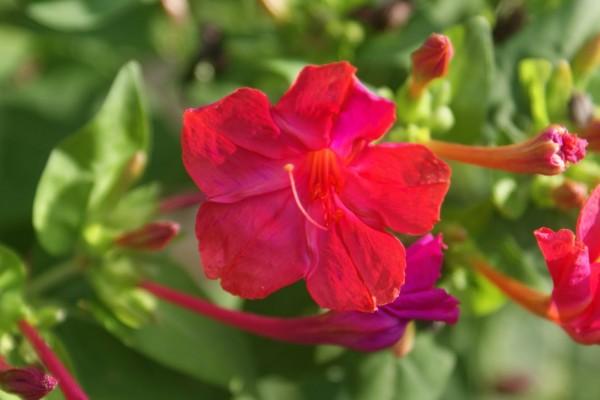 Linda flor en la planta