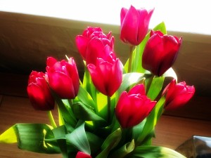 Postal: Bonito ramo de tulipanes fucsias