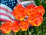 Bellos tulipanes naranjas