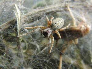 Postal: Una gran araña sobre la tela