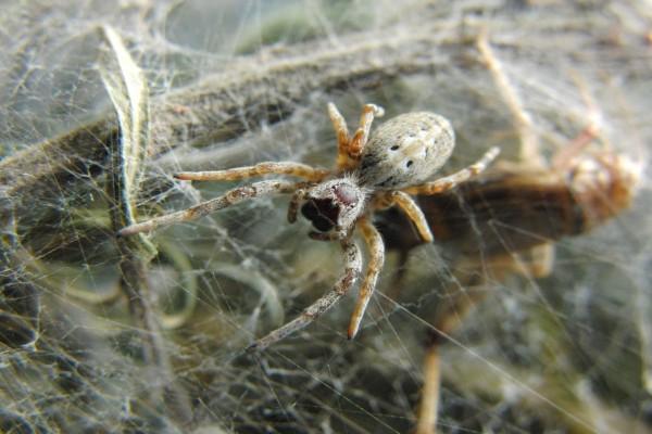 Una gran araña sobre la tela