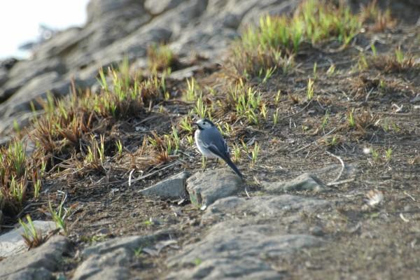 Un pájaro gris