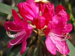 Postal: Conjunto de flores fucsias