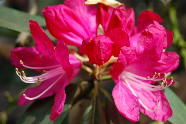 Conjunto de flores fucsias