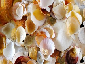 Lindo dibujo de conchas marinas
