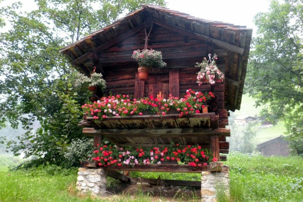 Pequeña cabaña con flores