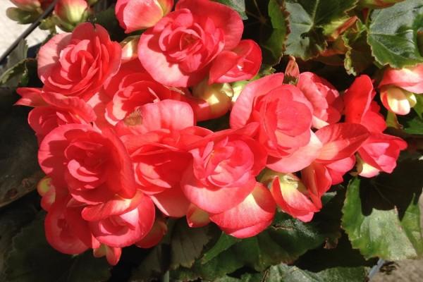 Planta con bonitas flores