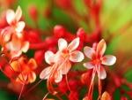 Pequeñas gotas sobre unas florecillas