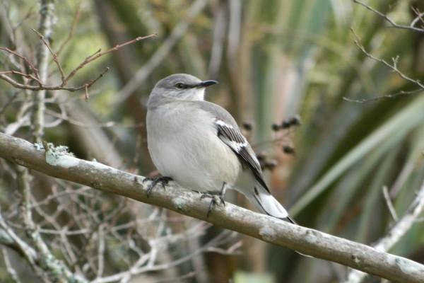 Pájaro posado en una rama