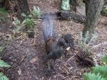 Ave con largas plumas en un bosque