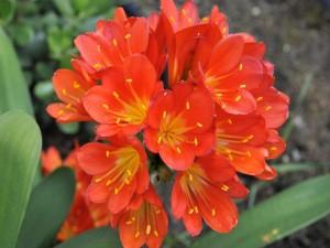 Postal: Bonitas florecillas naranjas