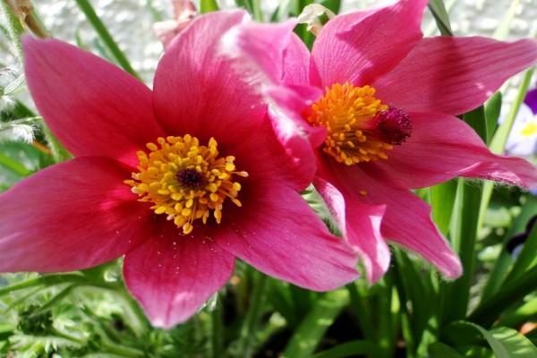 Dos bellas flores
