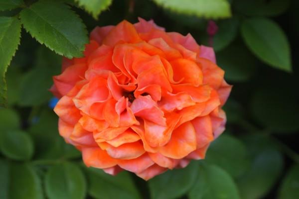 Una preciosa flor de color naranja