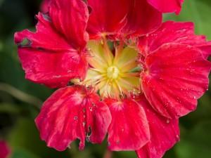 Flor con agujeros en los pétalos