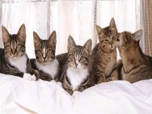Postal: Gatos en una cama