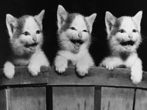 Tres gatitos felices
