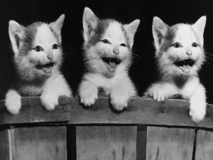 Postal: Tres gatitos felices