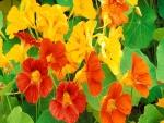Flores naranjas y amarillas