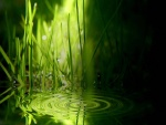 Ondas en el agua entre la hierba