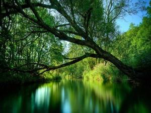 Árboles verdes a orillas del río