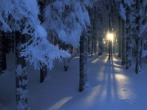 Postal: Los rayos de sol penetran en un bosque cubierto de nieve