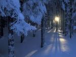 Los rayos de sol penetran en un bosque cubierto de nieve
